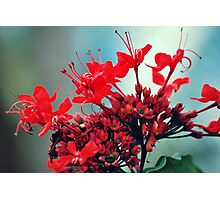 Mystic Red Flowers Photographic Print