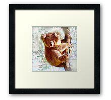 Young Koala on Raymond Island Framed Print