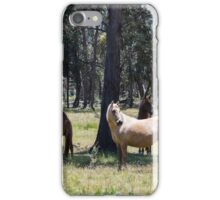 Brumbies in the Sun iPhone Case/Skin