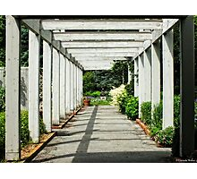 Walk to the Garden Party.... Photographic Print
