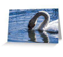 Swan drinking water Greeting Card