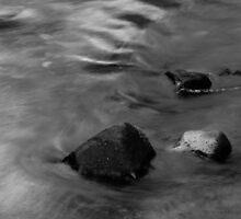 Lyre River No. 2, Olympic Peninsula, Washington, July 2013 by Steve G. Bisig
