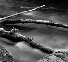 Lyre River No. 3, Olympic Peninsula, Washington, July 2013 by Steve G. Bisig