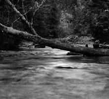Lyre River No. 4, Olympic Peninsula, Washington, July 2013 by Steve G. Bisig