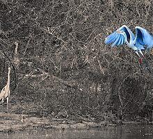 Kariba Heron by Leslie Naylor