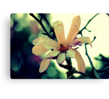 Spring Offering  Canvas Print