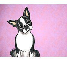 Boston Terrier Listen Up Photographic Print