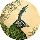Green Peafowl Head by Himmapaan