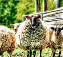 Sheep on the farm Sticker