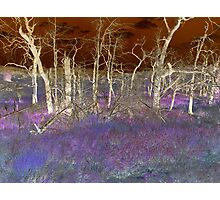 Fantasy Forest Photographic Print