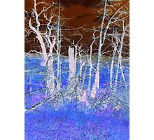 Blue Forest Photographic Print