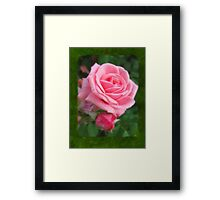 Pink Roses in Anzures 2 Blank P1F0 Framed Print