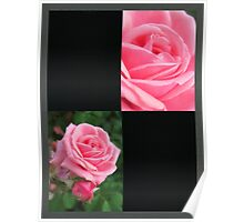 Pink Roses in Anzures 2 Blank Q2F0 Poster
