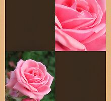 Pink Roses in Anzures 2 Blank Q3F0 by Christopher Johnson