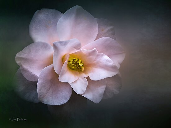Heart of gold by Jan Pudney