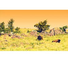 Buffalo Landscape Photographic Print