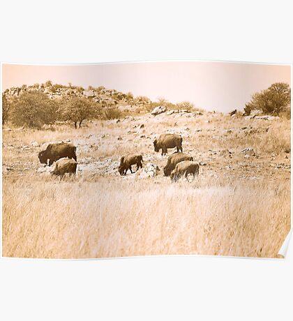 Buffalo Herd Poster
