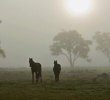 Horses in the Mist - West Ayalong, NSW by Malcolm Katon