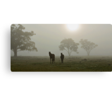 Horses in the Mist - West Ayalong, NSW Canvas Print
