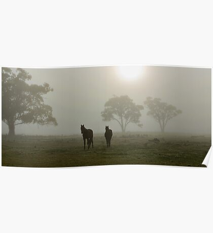 Horses in the Mist - West Ayalong, NSW Poster