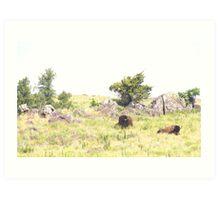 Buffalo Pair Art Print