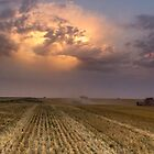 Wheat Harvest 2013 by Jay Stockhaus