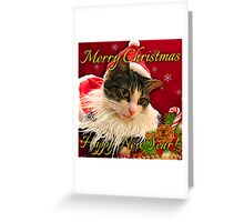 Santa Hat Cat Cards Greeting Card