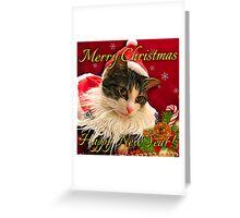 Santa Hat Cat Cards Greeting Card