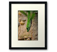 Green Envy Framed Print