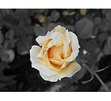Master Of Rose Photographic Print