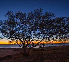 Whisper Tree by Matt Mason