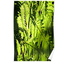Fern Wall Poster