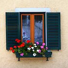 Window with flowers and shutters by Segalili