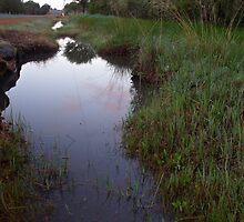 293/365 watery ways by LouJay