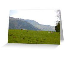 Lakeland sheep  Greeting Card