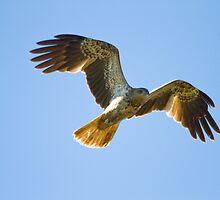 Wingspread by byronbackyard