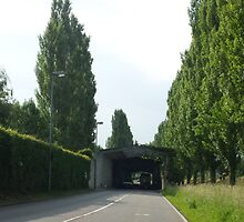 green, trees, hedge, tunnel, Slovenia by dhanushka