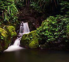 """Eventyrskog"" ∞ Lamington N.P, QLD - Australia by Jason Asher"