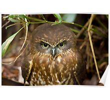 Southern Boobook Owl Poster