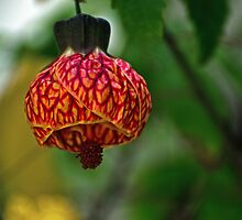 Floral Lantern by photojeanic