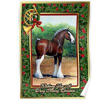 Clydesdale Draft Horse Christmas Card Poster