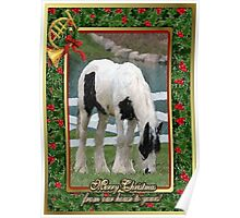Gypsy Vanner Horse Blank Christmas Card Poster