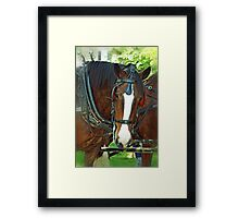 Shire Work Horse Framed Print
