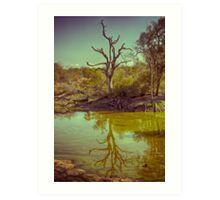 Leadwood Reflection Art Print