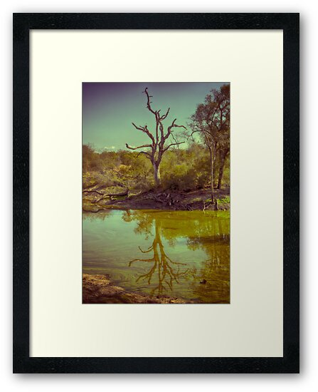 Leadwood Reflection by Michael  Moss