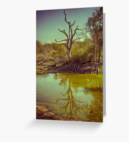 Leadwood Reflection Greeting Card
