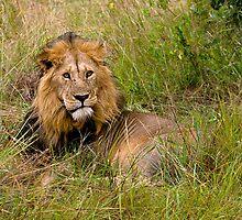 Great lion by Valerija S.  Vlasov