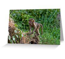 Baby baboon Greeting Card