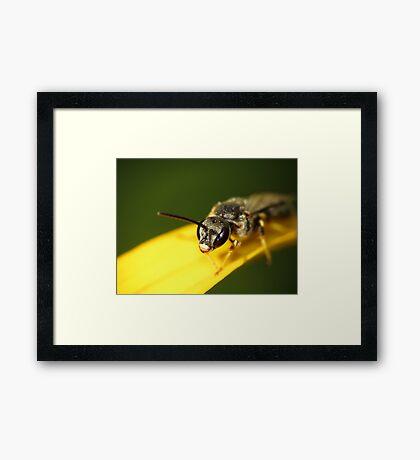 Bee 1 Framed Print