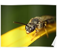 Bee 1 Poster